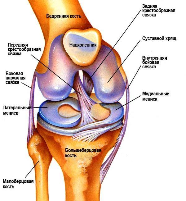 Боли коленного сустава лечение диагноз суставы